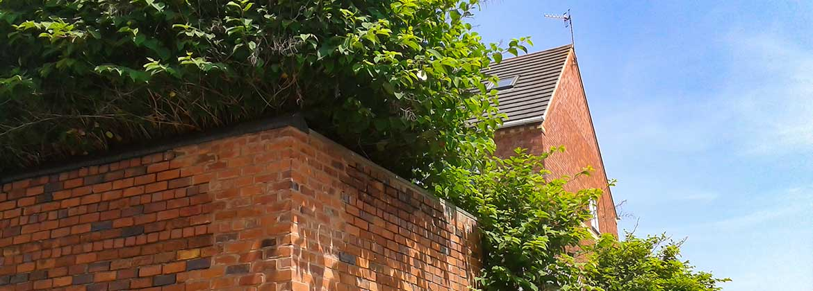 Anese Knotweed Removal Costs Landtech Uk Limited